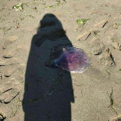 帕帕莫啊海灘用戶圖片
