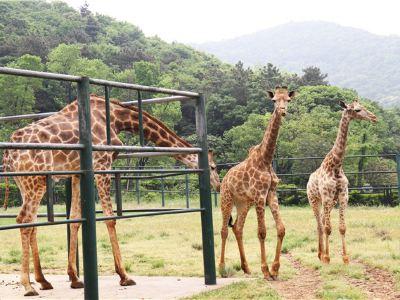 无錫動物園(太湖歓楽園)