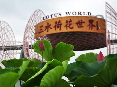Lotus Flower Wonderland (Sanshui Lotus World)