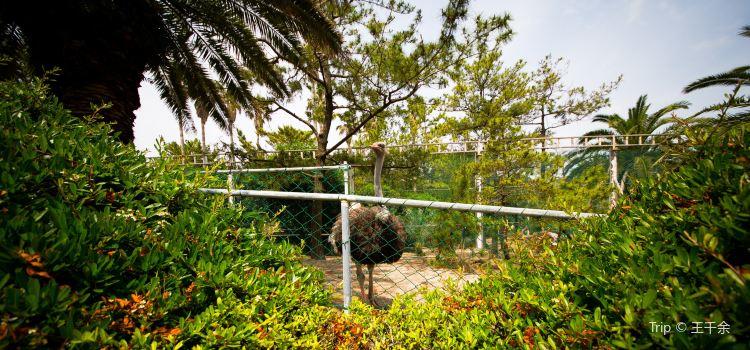 Hallim Park2