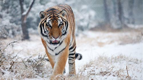 鄭州動物園