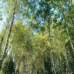 小東溝森林公園用戶圖片
