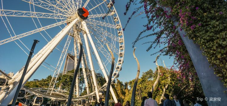 Wheel of Brisbane1