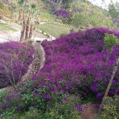 Mantuo Villa User Photo