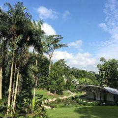 シンガポール植物園のユーザー投稿写真