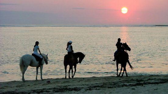 莫納山騎馬體驗
