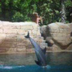 Dolphin Bay User Photo