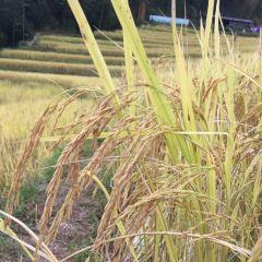 Ou's Terrace User Photo