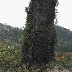 天平山用戶圖片