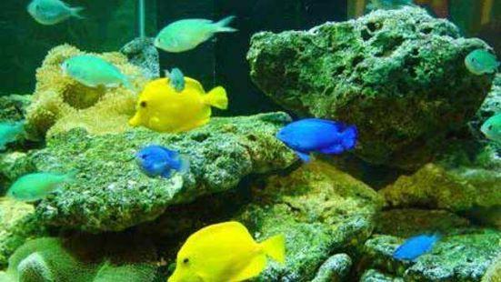 嵊泗海洋生物館