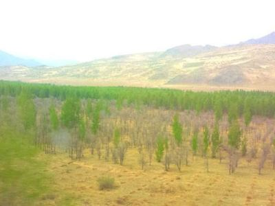 科爾沁沙地生態示範區