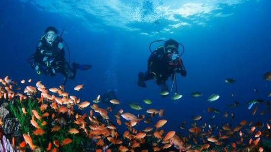 亞龍灣巨浪潛水俱樂部