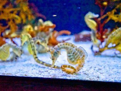 Seahorse World