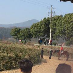 馬畈農業奇幻樂園用戶圖片