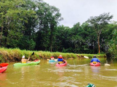 Pineapple Kayak Tours