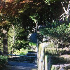 가고시마 만 여행 사진