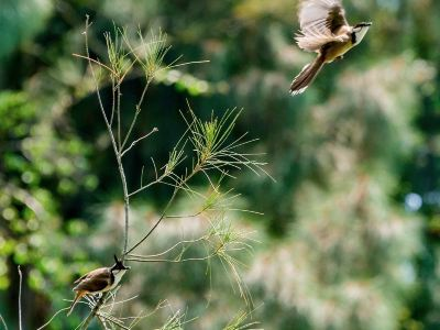 화차오성(화교성) 습지공원