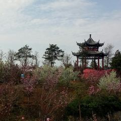 옌타이 식물원 여행 사진