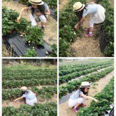 Sorell Fruit Farm用戶圖片