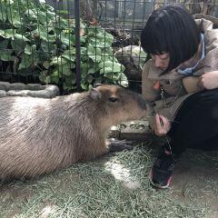 神戶動物王國用戶圖片