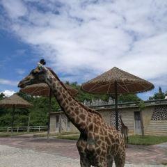구이저우 삼림 야생동물원 여행 사진