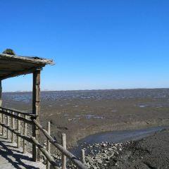 압록강하구습지 여행 사진