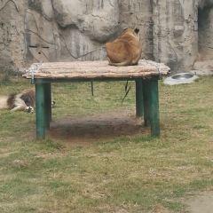 Zhengzhou Zoo User Photo