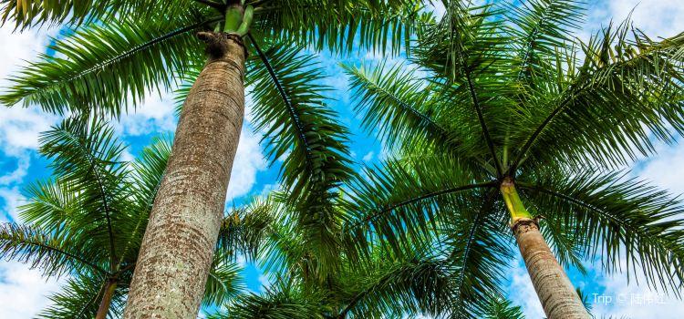 興隆熱帶植物園1