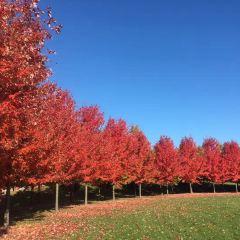 Maple Leaf Gardens User Photo