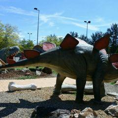 National Dinosaur Museum User Photo