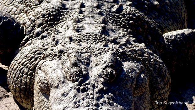 The Crocodile Ranch