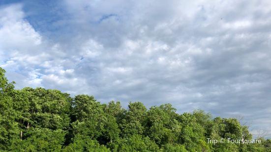 Garbry Big Woods Sanctuary