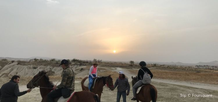 Moonlight Horse Ranch3