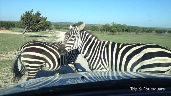 Topsey Exotic Ranch & Drive Thru Safari