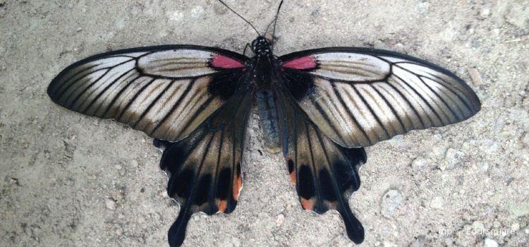 Schmetterlingspark2