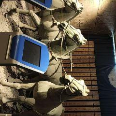 淄博市博物館用戶圖片