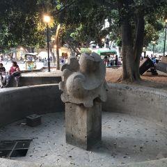 Zocalo User Photo