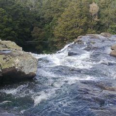 Wairere Falls Track User Photo