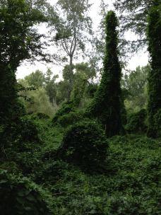Parc Municipal de la Mitjana-莱里达省