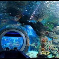 千島湖海洋館用戶圖片
