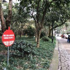Xixia Hill User Photo