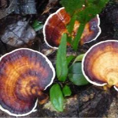 丹濃谷自然保護區用戶圖片