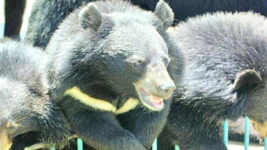 黑寶熊樂園