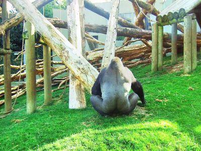 Howth Swim Safari