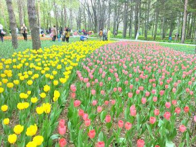 헤이룽장성 삼림식물원