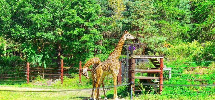 佛蘭克林動物園