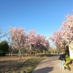 弥河公園のユーザー投稿写真