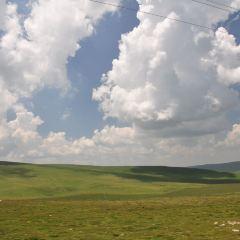 기련산초원 여행 사진