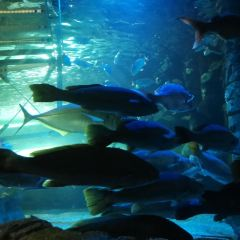 Sea Life Sydney Aquarium User Photo