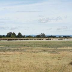 新錫德爾湖與費爾特湖地區文化景觀用戶圖片